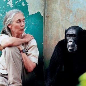 T5 Jane Goodall